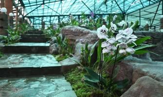 Открытие Музей Орхидей в г. Вологда