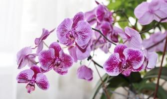 Выведен новый вид орхидей